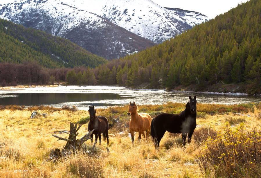 Na região dos Andes chilenos, uma das atividades mais procuradas pelos visitantes da Patagônia são os <strong>passeios a cavalo</strong>, que percorrem suas trilhas montanhosas. A cidade de San Martín de Los Andes é uma das mais procuradas para esse tipo de atividade