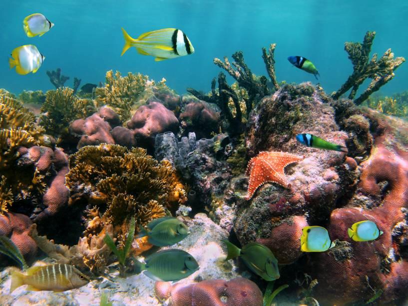 <strong>2. Cozumel</strong>Destino de mergulho obrigatório para quem visita a Riviera Maia: seus corais formam alguns dos mosaicos naturais submersos mais belos do mundo
