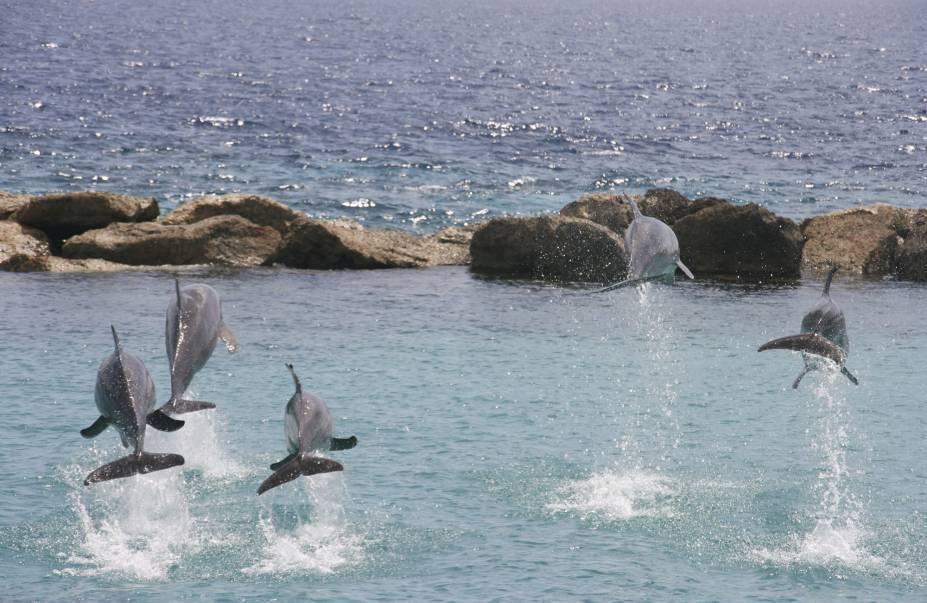 Golfinhos em Curacao