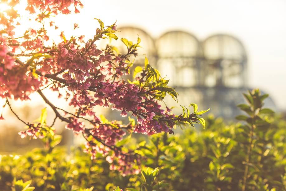 Cartão-postal de Curitiba, a estufa do Jardim Botânico é uma ótima opção de passeio em dias claros