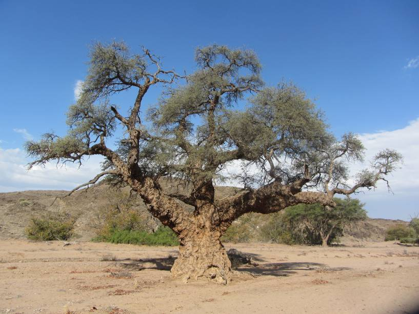 """<a href=""""http://www.tgk.tur.br/"""" rel=""""TGK"""" target=""""_blank""""><strong>TGK</strong></a><strong>O QUE ELA FAZ POR VOCÊ</strong>Monta um tour abrangente pelo país.<strong>PACOTE</strong>São oito noites por Windhoek, Etosha, Twyfelfontein, Swakopmund, Sossusvlei e Johannesburgo, com safári para ver elefantes em Damaraland (foto), visita às pinturas rupestres de Twyfelfontein e tour de barco entre as focas e golfinhos de Walvis Bay. Em hotéis mid e upscale com meia-pensão em Etosha e Twyfelfontein e três refeições em Sossusvlei, sai a US$ 2 045 (sem aéreo)."""
