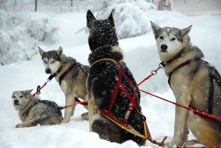 """Um dos diferenciais de <a href=""""http://viajeaqui.abril.com.br/cidades/ar-chapelco"""" rel=""""Chapelco """" target=""""_blank""""><strong>Chapelco</strong></a> são os passeios em trenós puxados por cães de tiro, no Bosque de los Huskies"""