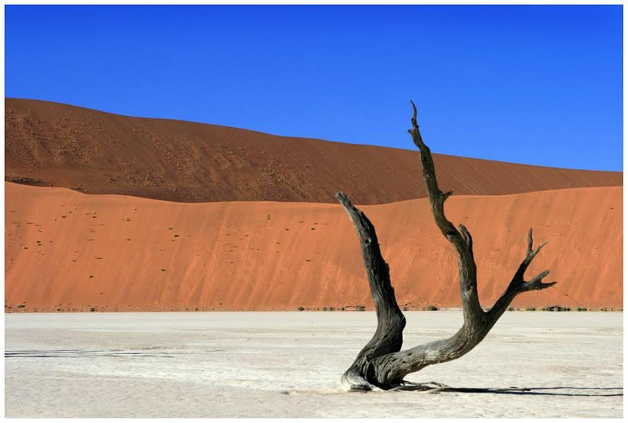 """<a href=""""http://tgk.tur.br"""" rel=""""TGK"""" target=""""_blank""""><strong>TGK</strong></a>        <strong>O QUE ELA FAZ POR VOCÊ:</strong> Explora partes pouco turísticas do mundo, como a Namíbia.        <strong>PACOTE:</strong>No oeste da <a href=""""http://viajeaqui.abril.com.br/continentes/africa"""" rel=""""África"""" target=""""_blank"""">África</a>, a Namíbia resguarda rica fauna e flora, como o quase extinto rinoceronte-negro e o raríssimo elefante do deserto. São oito noites visitando parques nacionais, tribos e os principais centros do país, passando por Windhoek, a capital, pelo Parque Nacional Etosha, pelo sítio arqueológico de Twyfelfontein e pela litorânea Swakopmund. Há também uma noite em <a href=""""http://viajeaqui.abril.com.br/cidades/africa-do-sul-johannesburgo"""" rel=""""Johannesburgo"""" target=""""_blank"""">Johannesburgo</a>, na volta. Desde US$ 3 830."""
