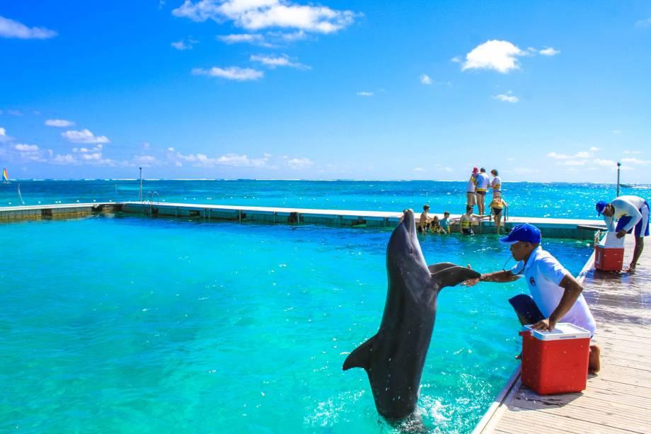 Dolphin Island Park, em Bávaro, ao norte de Punta Cana