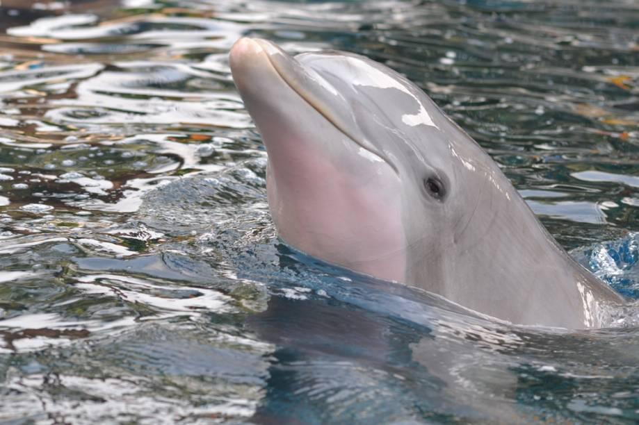 Golfinho em apresentação do parque aquático SeaWorld, em Orlando. Apesar das polêmicas, turistas do mundo inteiro seguem em larga escala para ver os shows de animais marinhos