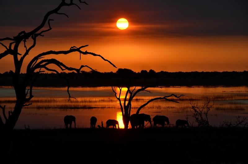 Ao final de tarde no Chobe National Park, em Botswana, elefantes se refrescam à beira do rio que dá nome ao parque.