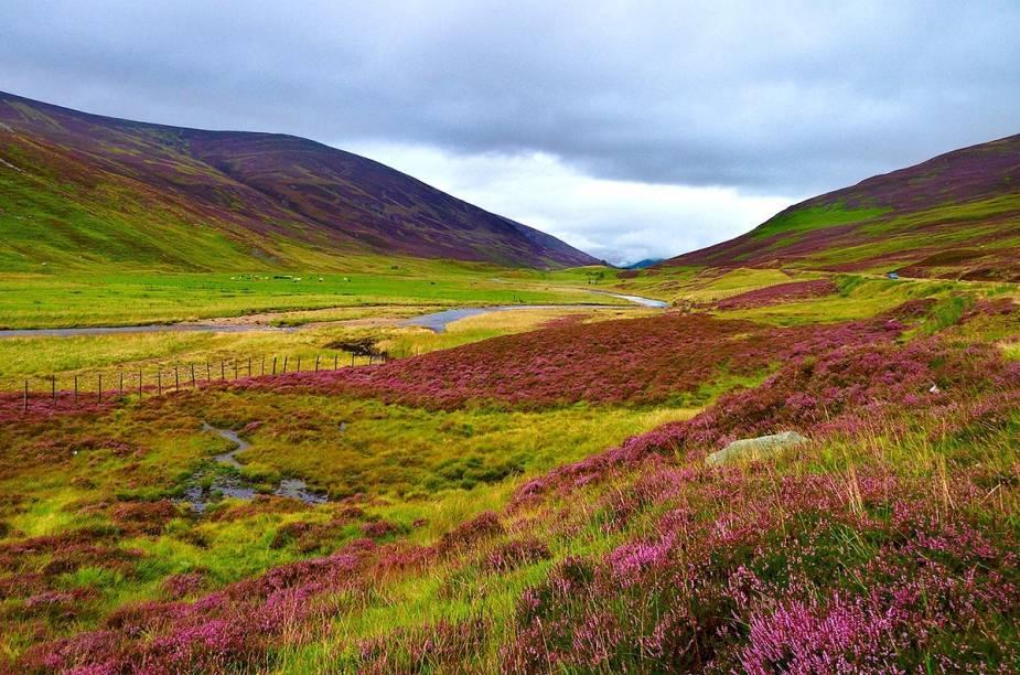 """O cenário das <a href=""""http://viajeaqui.abril.com.br/cidades/reino-unido-highlands"""" rel=""""highlands escocesas"""" target=""""_blank"""">highlands escocesas</a>, nas beiras das estradas, é decorado pela relva e por flores silvestres"""