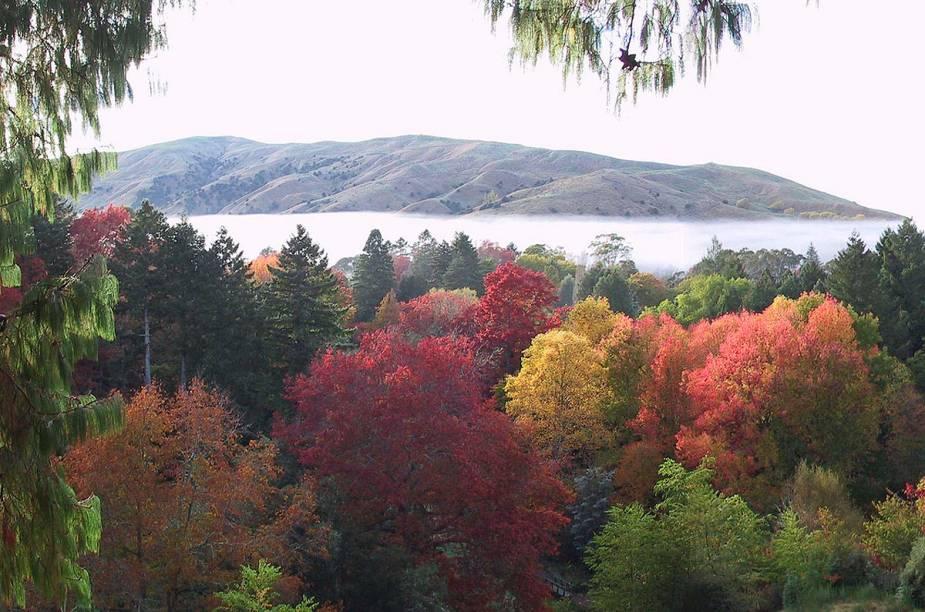 Vista do parque Eastwoodhill Arboretum, onde é possível fazer trilhas a pé
