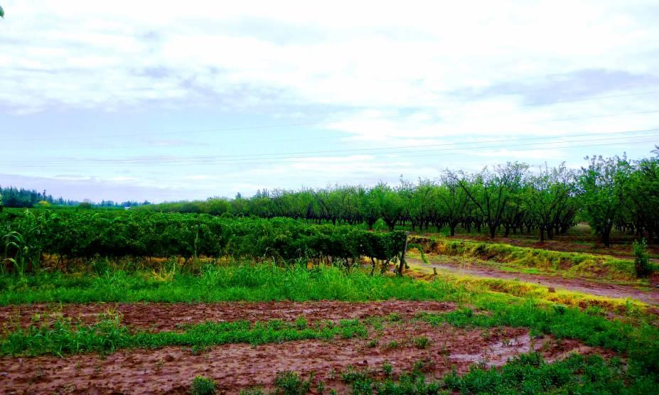 """<strong><a href=""""http://elcerno-wines.com.ar/"""" rel=""""6. Viña Maipú El Cerno"""" target=""""_blank"""">6. Viña Maipú El Cerno</a> (<a href=""""http://viajeaqui.abril.com.br/cidades/ar-mendoza"""" rel=""""Mendoza"""" target=""""_self"""">Mendoza</a>, <a href=""""http://viajeaqui.abril.com.br/paises/argentina"""" rel=""""Argentina"""" target=""""_self"""">Argentina</a>) </strong>A vinícola é pequena e com capacidade de produção bem menor que as outras. No entanto, os vinhos artesanais são saborosos e o passeio curto, repleto de uma atmosfera familiar, é todo cercado pelo charme rústico do local. Vale a pena degustar do rótulo Malbec Filósofos, um dos mais famosos da propriedade."""