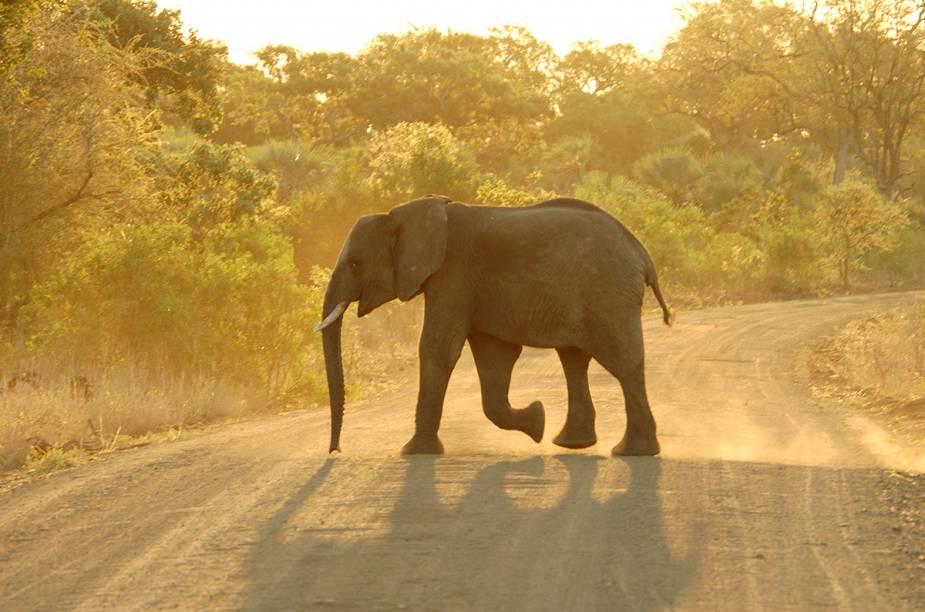 """<a href=""""http://viajeaqui.abril.com.br/paises/africa-do-sul"""" rel=""""ÁFRICA DO SUL """" target=""""_blank""""><strong>ÁFRICA DO SUL </strong></a>A África do Sul é um país que vem caindo no gosto do turista brasileiro: há voos diretos do<a href=""""http://viajeaqui.abril.com.br/paises/brasil"""" rel="""" Brasil"""" target=""""_blank""""> Brasil</a> para <a href=""""http://viajeaqui.abril.com.br/cidades/africa-do-sul-johannesburgo"""" rel=""""Joanesburgo"""" target=""""_blank"""">Joanesburgo</a>, os safáris são irresistíveis, a <a href=""""http://viajeaqui.abril.com.br/cidades/africa-do-sul-cidade-do-cabo"""" rel=""""Cidade do Cab"""" target=""""_blank"""">Cidade do Cab</a>o é maravilhosa e os vinhos sul-africanos já provaram há muito tempo sua qualidade."""