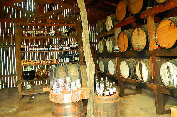 """Quando a cana está madura os visitantes podem provar a cachaça feita no <a href=""""http://viajeaqui.abril.com.br/estabelecimentos/br-sp-holambra-atracao-rancho-da-cachaca"""" target=""""_blank"""">Rancho da Cachaça</a> e ver o processo de fabricação da bebida. Compras estão liberadas."""