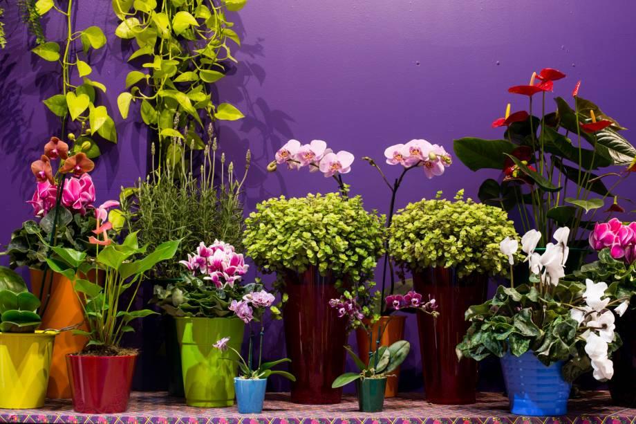 As mostras da Expoflora conta com vinte ambientes e 2 mil vasos de flores com mais de 3.500 espécies