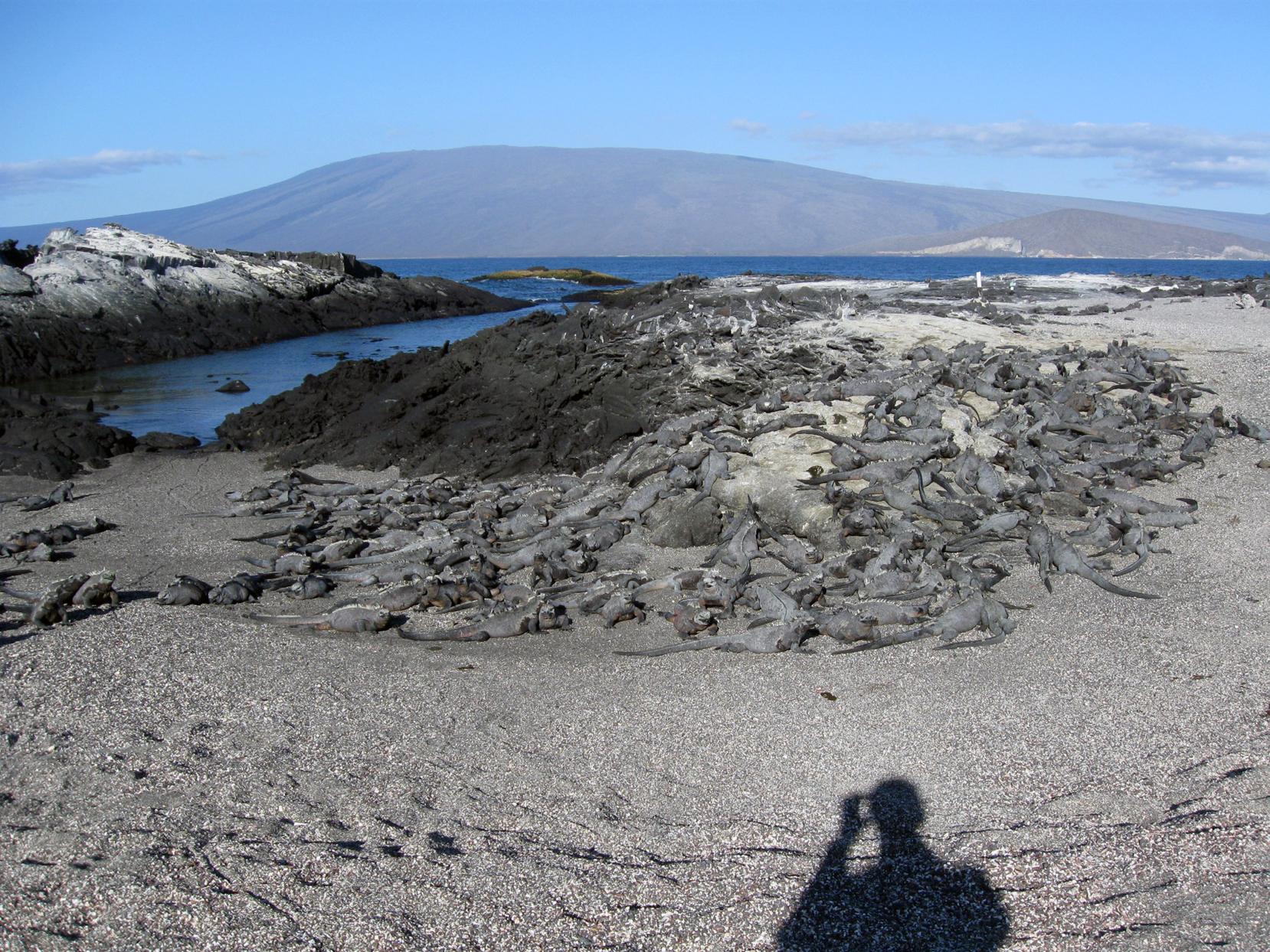 Fernandina, Galápagos