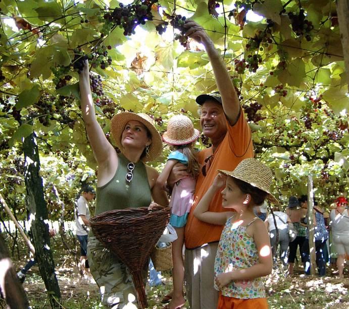 Visitantes podem participar de diversas etapas do processo da produção de vinho