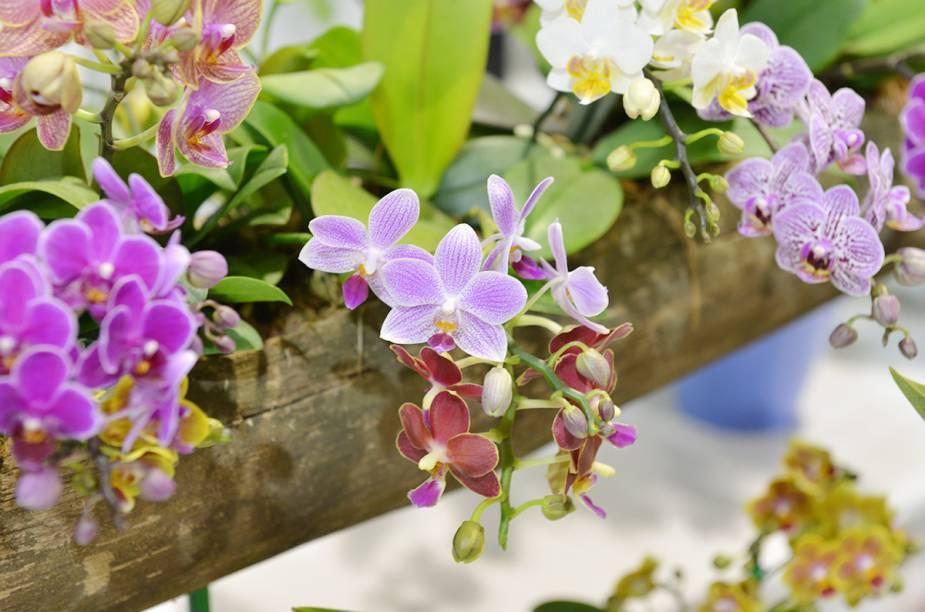 A feira em 2014 tem mais de quarenta expositores de flores e plantas
