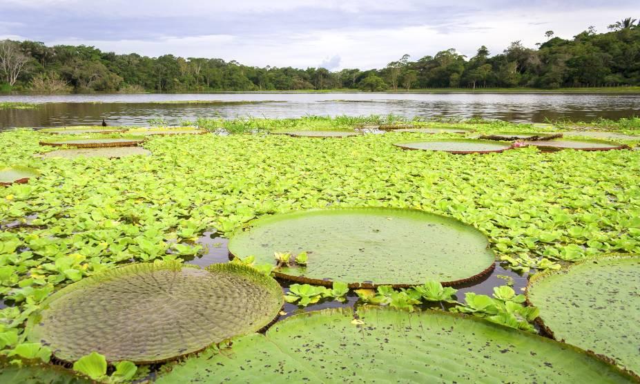"""Linda e rica! Nossa <strong>Floresta Amazônica</strong>é um verdadeiro tesouro, com um ecossistema riquíssimo e diversas espécies de plantas (vide a vitória-régia), árvores e animais. Sua extensão territorial ocupa, além do Brasil, países como <a href=""""http://viajeaqui.abril.com.br/paises/peru"""" rel=""""Peru"""" target=""""_self"""">Peru</a>, <a href=""""http://viajeaqui.abril.com.br/paises/colombia"""" rel=""""Colômbia"""" target=""""_self"""">Colômbia</a>, <a href=""""http://viajeaqui.abril.com.br/paises/venezuela"""" rel=""""Venezuela"""" target=""""_self"""">Venezuela</a> e <a href=""""http://viajeaqui.abril.com.br/paises/equador"""" rel=""""Equador"""" target=""""_self"""">Equador</a> - e merece todas as nossas iniciativas para protegê-la contra o desmatamento"""