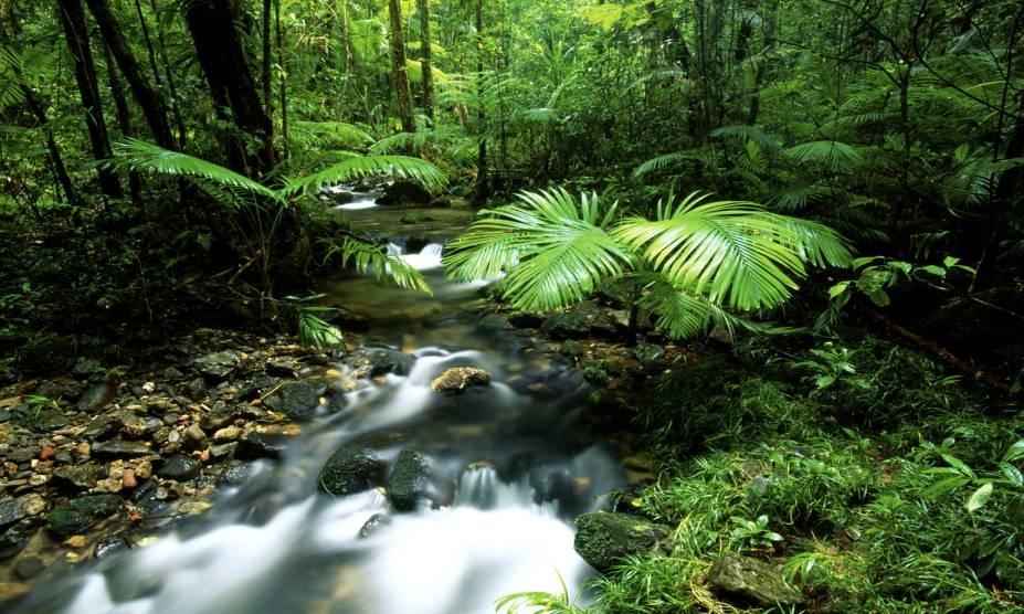 """<strong>29. Floresta Daintree, <a href=""""http://viajeaqui.abril.com.br/paises/australia"""" rel=""""Austrália"""" target=""""_self"""">Austrália</a></strong>            Só o nome da floresta já inspira boas histórias: ele é uma homenagem ao geólogo e fotógrafo Richard Daintree, que descobriu a região e realizou trabalhos importantes por ali. O ecoturismo da reserva é um dos pontos fortes da Austrália, com paisagens que impressionam por sua beleza. Seu ecossistema é considerado um dos mais expressivos do mundo, que inclui uma quantidade impressionante de espécies de plantas, árvores e animais. Vale, inclusive, fazer uma visita guiada no entorno de seus lagos e observar os crocodilos que moram ali."""