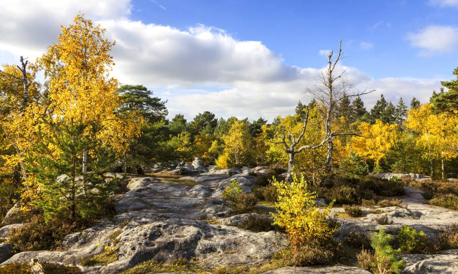"""<strong>33. Floresta de Fontainebleau, <a href=""""http://viajeaqui.abril.com.br/paises/franca"""" rel=""""França"""" target=""""_self"""">França</a></strong>        Localizada a 60 km do sudeste de Paris, essa floresta serviu de inspiração para as pinturas impressionistas de Renoir. Ocupando uma área de 280 km², é o lar de espécies de flores e pássaros, além de ser famosa por seus grandes pedregulhos. Na ficção, serviu de palco para obras como a trilogia """"Les Fourmis"""" (sem tradução para o português), publicada em 1991 pelo novelista Bernard Werber, e para a ópera """"Don Carlos"""", do italiano Giuseppe Verdi. Hoje, a floresta é uma das principais fornecedoras de madeira para a produção de tonéis de carvalho, fabricados com o intuito de armazenar vinhos.        <a href=""""http://www.booking.com/city/fr/fontainebleau.pt-br.html?sid=efe6c9de408bb8d78e20e017e616e9f8;dcid=4?aid=332455&label=viagemabril-florestasencantadas"""" rel=""""Veja preços de hotéis próximos em Fontainebleau no Booking.com"""" target=""""_blank"""">Veja preços de hotéis em Fontainebleau no Booking.com</a>"""