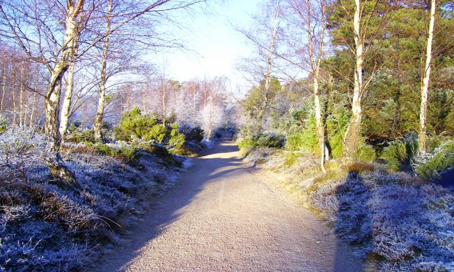 """A Floresta de Rothiemurchus, na Escócia, é marcada por lendas nórdicas que incrementam ainda mais a visita: não é só um lugar para admirar a rica natureza escocesa, como também para saber mais da cultura do país <a href=""""http://viajeaqui.abril.com.br/materias/florestas-encantadas-pelo-mundo#35"""" rel=""""LEIA MAIS"""" target=""""_blank""""><strong>LEIA MAIS</strong></a>"""
