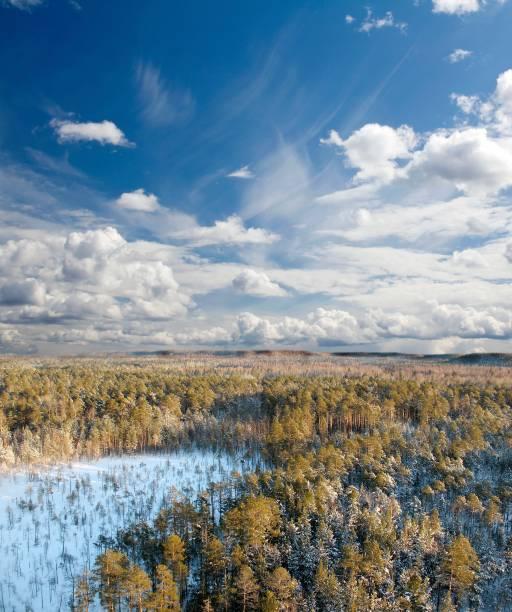 """<strong>Taiga Siberiana, Sibéria</strong>            Não é no norte do <a href=""""http://viajeaqui.abril.com.br/paises/brasil"""" rel=""""Brasil"""" target=""""_blank"""">Brasil</a> que a maior floresta do mundo se localiza, mas no oeste da Sibéria. A Amazônica é somente a maior tropical, enquanto a russa é três vezes maior do que a brasileira. O bioma dessa floresta é composto por árvores coníferas, mas não há muita diversificação graças ao frio intenso"""
