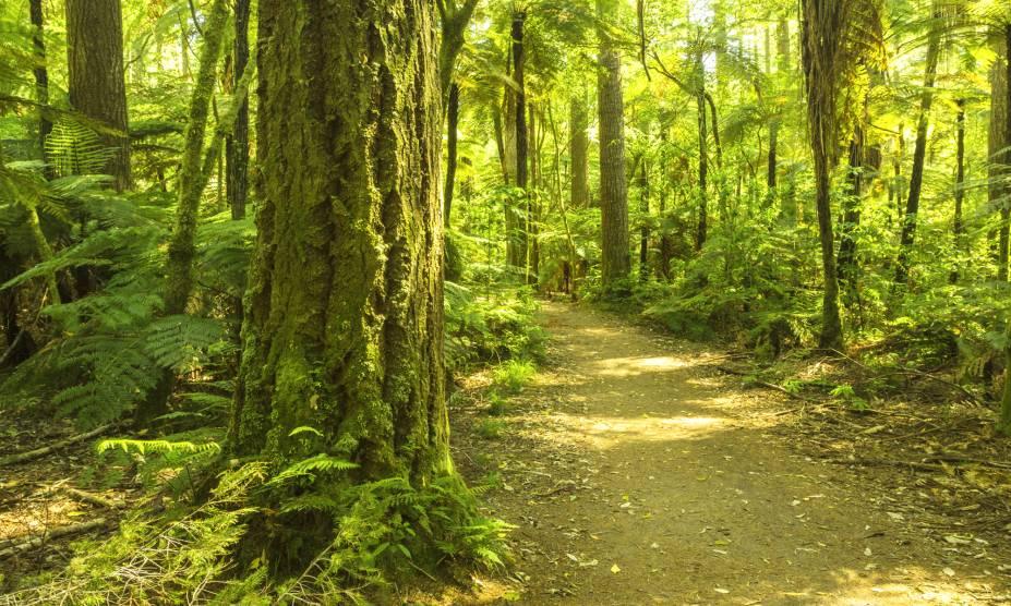 """<strong>20. Floresta Nacional de Redwood, Califórnia, <a href=""""http://viajeaqui.abril.com.br/paises/estados-unidos"""" rel=""""Estados Unidos"""" target=""""_self"""">Estados Unidos</a></strong>            A Califórnia abriga as árvores de sequoias, típicas da região e conhecidas por serem as mais altas e impressionantes do mundo. Ocupando uma área de mais de 50 mil hectares, essa bela reserva florestal concentra boa parte dessas espécies – e serviu de cenário para o filme """"O Retorno de Jedi"""", da saga Star Wars. Seus caminhos escondem algumas das construções das tribos nativas que habitaram o local, e que permeiam boa parte das histórias acerca dessas árvores. Conta-se, inclusive, que eles seriam os povos responsáveis por protegê-las, mas sucumbiram com as invasões de caçadores que acreditavam que as mesmas escondiam ouro. Hoje, a área é tombada como Patrimônio Mundial da UNESCO e conta com muitas iniciativas de preservação."""