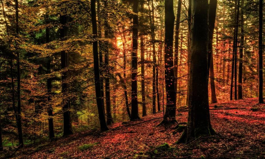 """<strong>2. Floresta Negra, Baden-Württemberg, <a href=""""http://viajeaqui.abril.com.br/paises/alemanha"""" rel=""""Alemanha"""" target=""""_self"""">Alemanha</a></strong>                            Cortada pelo Vale do Reno, essa imensa floresta alemã é o maior parque natural do país, com diversas trilhas entre suas imensas árvores. Localizada no Estado de Baden-Württemberg, na fronteira com a <a href=""""http://viajeaqui.abril.com.br/paises/franca"""" rel=""""França"""" target=""""_self"""">França</a> e a <a href=""""http://viajeaqui.abril.com.br/paises/suica"""" rel=""""Suíça"""" target=""""_self"""">Suíça</a>, a floresta já foi inspiração para contos dos irmãos Grimm com sua atmosfera enigmática e pouca iluminação. O imaginário popular a transformou em cenário de fábulas, que podem ser tanto assustadoras quanto encantadas. Para quem vai visitar a região, essa é, sem dúvidas, uma das paradas obrigatórias.                            <a href=""""http://www.booking.com/region/de/black-forest.pt-br.html?aid=332455&label=viagemabril-florestasencantadas"""" rel=""""Veja preços de hotéis próximos à Floresta Negra no Booking.com"""" target=""""_blank"""">Veja preços de hotéis próximos à Floresta Negra no Booking.com</a>"""