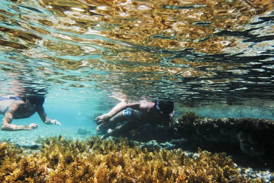 Fernando de Noronha tem com águas transparentes - a visibilidade chega a 50 metros - e a temperatura média de suas águas é de 27ºC. O ápice da visibilidade ocorre entre agosto e novembro