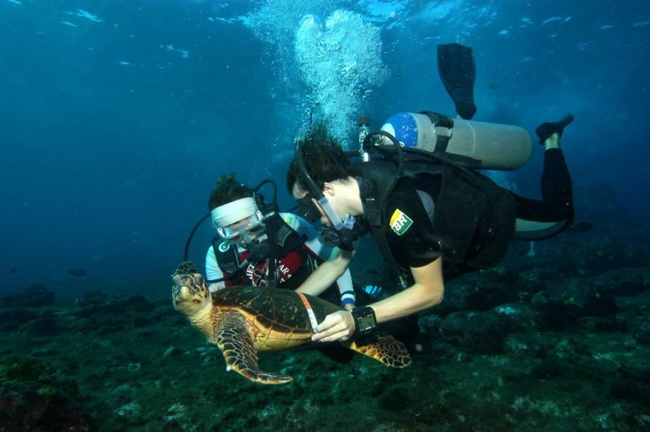 Técnicos do Projeto Tamar fazendo biometria em tartaruga no fundo do mar de Noronha