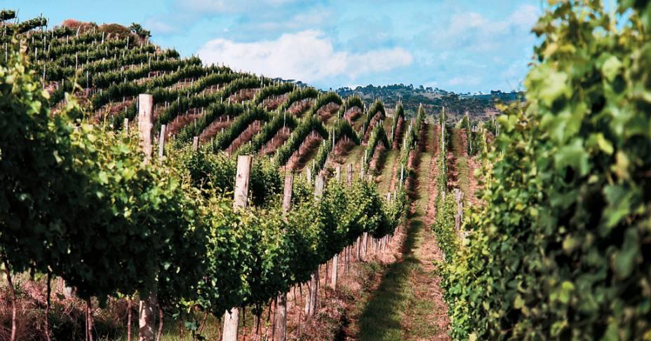 Parreiras da vinícola Sanjo