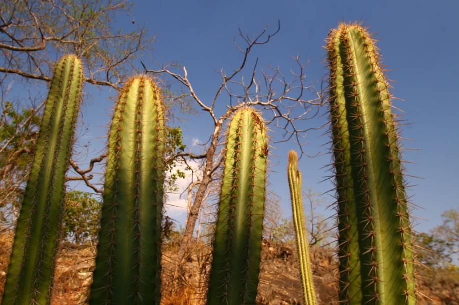 Vegetação do Cerrado maranhense na Chapada das Mesas, Maranhão