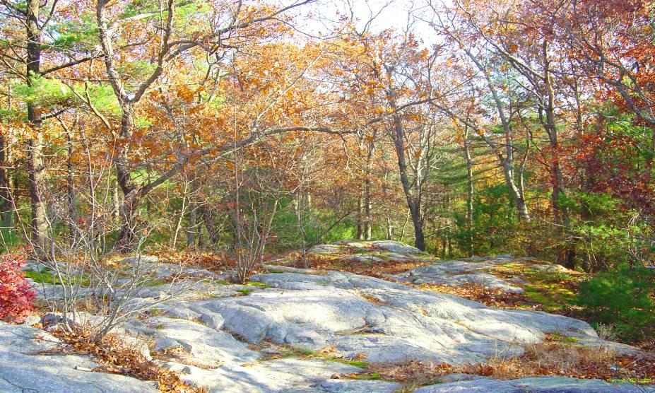 """<strong>15. Floresta Estatal Freetown Fall River, <a href=""""http://viajeaqui.abril.com.br/paises/estados-unidos"""" rel=""""Estados Unidos"""" target=""""_self"""">Estados Unidos</a></strong>            Com uma área de 518 km², essa floresta ocupa uma parte do Triângulo de Bridgewater, ao sudeste de Massachussets. Conta-se que durante a ocupação dos ingleses, os povos nativos tiveram de abandonar a floresta, deixando para trás cemitérios ocultos. Nos anos 1970, o local foi palco de rituais satânicos e assassinatos. Moradores da região alegam que corpos de vítimas foram enterrados ali. Hoje, quem se aventura pelo local jura sentir a manifestação de fenômenos sobrenaturais, tais como óvnis e bolas de fogo."""