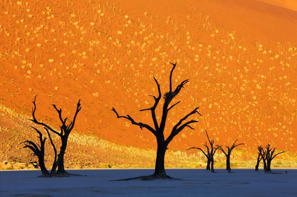 Dead Vlei - Namíbia