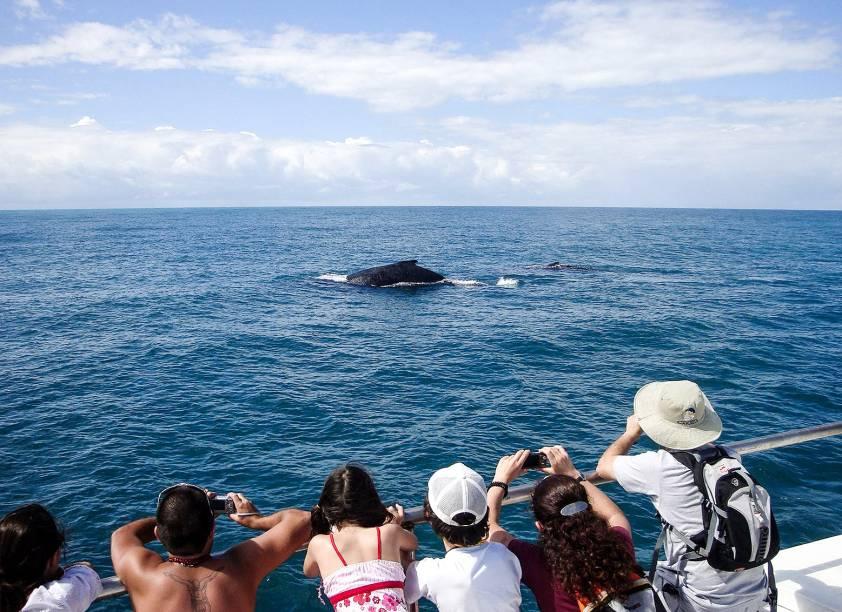 """Entre os passeios, está a <a href=""""http://viajeaqui.abril.com.br/estabelecimentos/br-ba-porto-seguro-atracao-passeio-de-barco-para-observacao-de-baleias-jubarte"""" rel=""""observação de baleias-jubarte"""" target=""""_blank"""">observação de baleias-jubarte</a>"""