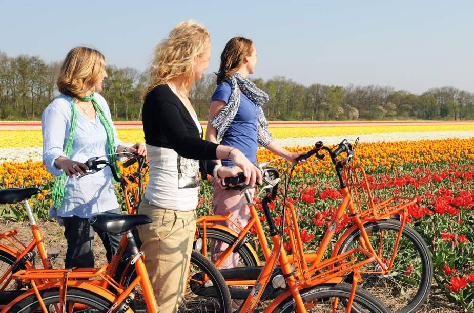 Durante o passeio ao parque, o visitante não vê apenas as famosas tulipas holandesas, mas também flores de várias outras espécies