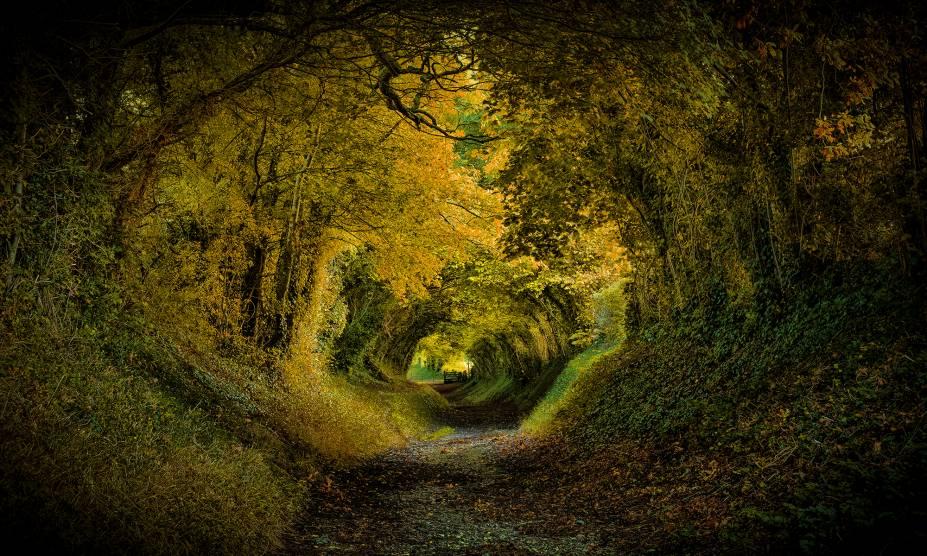 """<strong>8. Túnel de Halnaker, West Sussex, <a href=""""http://viajeaqui.abril.com.br/paises/reino-unido?iframe=true"""" rel=""""Reino Unido"""" target=""""_self"""">Reino Unido</a></strong>                        A aldeia inglesa que abriga essa pequena floresta já é um charme só, com paisagens bucólicas e um moinho de vento. No entanto, é nesse túnel que se concentra a fama do lugar, com um cenário tão bonito quanto romântico. Para alguns, a impressão que se dá ao observá-lo é a de que um príncipe vai surgir em um cavalo branco a qualquer momento. Para outros, o lugar seria perfeito para abrigar as aventuras de hobbits como Bilbo Bolseiro, que poderia vir seguido por anões montados em pôneis. Seja qual for a escolha, não dá pra negar que a visão é bem mágica."""