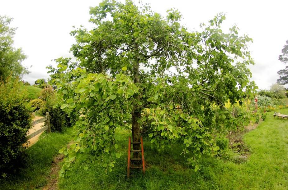 As macieiras compõem uma parte importante da história no filme