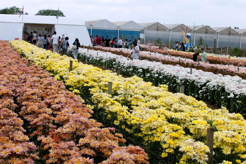 Visitantes nos campos de flores da Expoflora, em Holambra (SP)