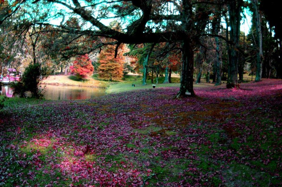 Parque Horto Florestal, em Campos do Jordão, São Paulo