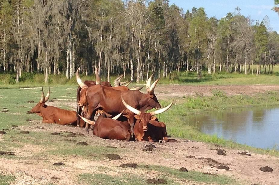 """<strong>Safari Wilderness Ranch</strong>                                                        É preciso reservar o passeio antes no <a href=""""http://safariwilderness.com/visit/"""" rel=""""site do safari"""" target=""""_blank"""">site do safari</a>."""