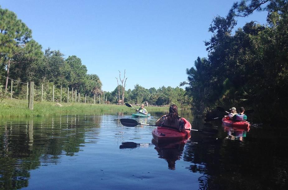 <strong>Brevard Zoo</strong>                    Dentro do zoológico, é possível alugar caiaques para realizar um passeio guiado entre os animais - as girafas aproximam-se do curso do rio para observar os visitantes