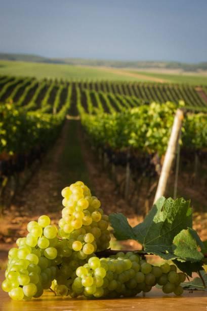 As vinícolas abertas à visitação são as maiores responsáveis por atrair os visitantes a Garibaldi, no Rio Grande do Sul