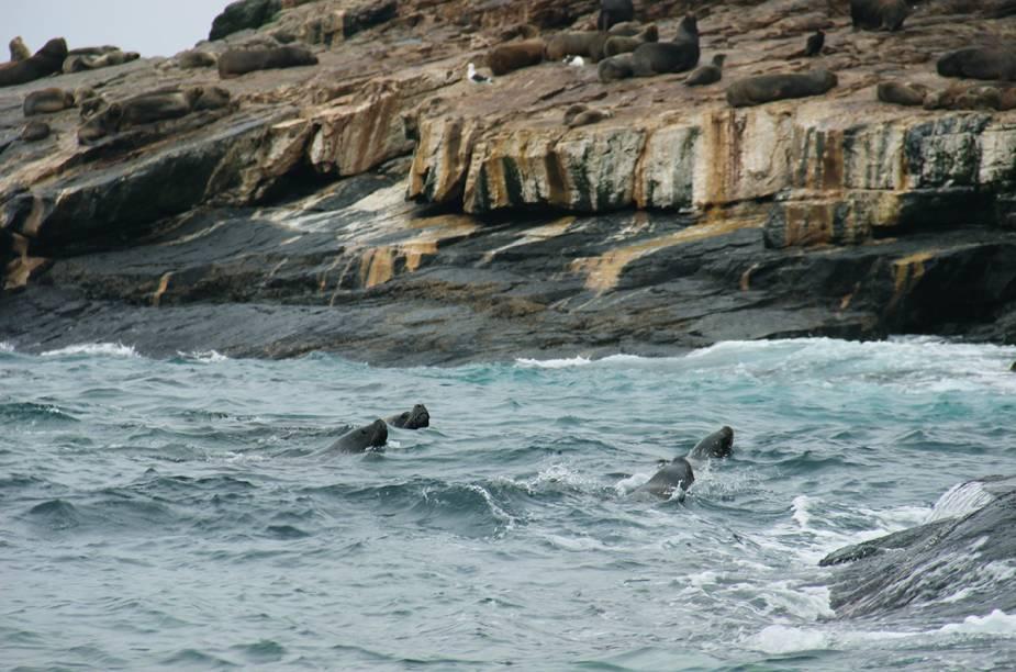 """<strong>Agrupación de Turismo Delfines - Caleta Chañaral de Aceituno, <a href=""""http://viajeaqui.abril.com.br/paises/chile"""" rel=""""Chile """" target=""""_blank"""">Chile </a></strong>            A ONG procura desenvolver o turismo comunitário sustentável na vila de pescadores Caleta Chañaral de Acetuno, famosa pela prática de avistamento de baleias, pinguins, leões marinhos e aves diversas."""