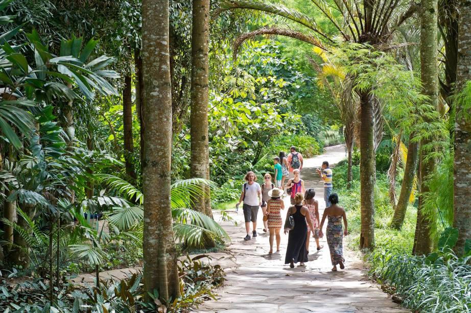 """O exuberante jardim do <a href=""""http://viajeaqui.abril.com.br/estabelecimentos/br-mg-brumadinho-atracao-instituto-inhotim"""" rel=""""Instituto Inhotim"""" target=""""_blank"""">Instituto Inhotim</a> ostenta uma das maiores coleções de espécies vivas entre todos os jardins botânicos do <a href=""""http://viajeaqui.abril.com.br/paises/brasil"""" rel=""""Brasil"""" target=""""_blank"""">Brasil</a>"""