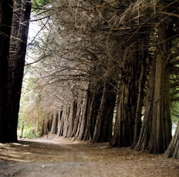A Isla Victoria, uma das boas atrações de Bariloche, é toda ocupada por uma alameda de sequoias,que podem ser apreciadas através de uma curta trilha de 600 metros