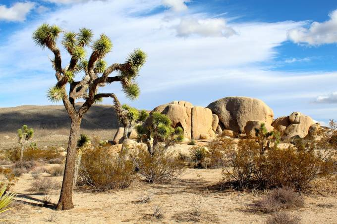 Joshua Tree National Park Estados Unidos