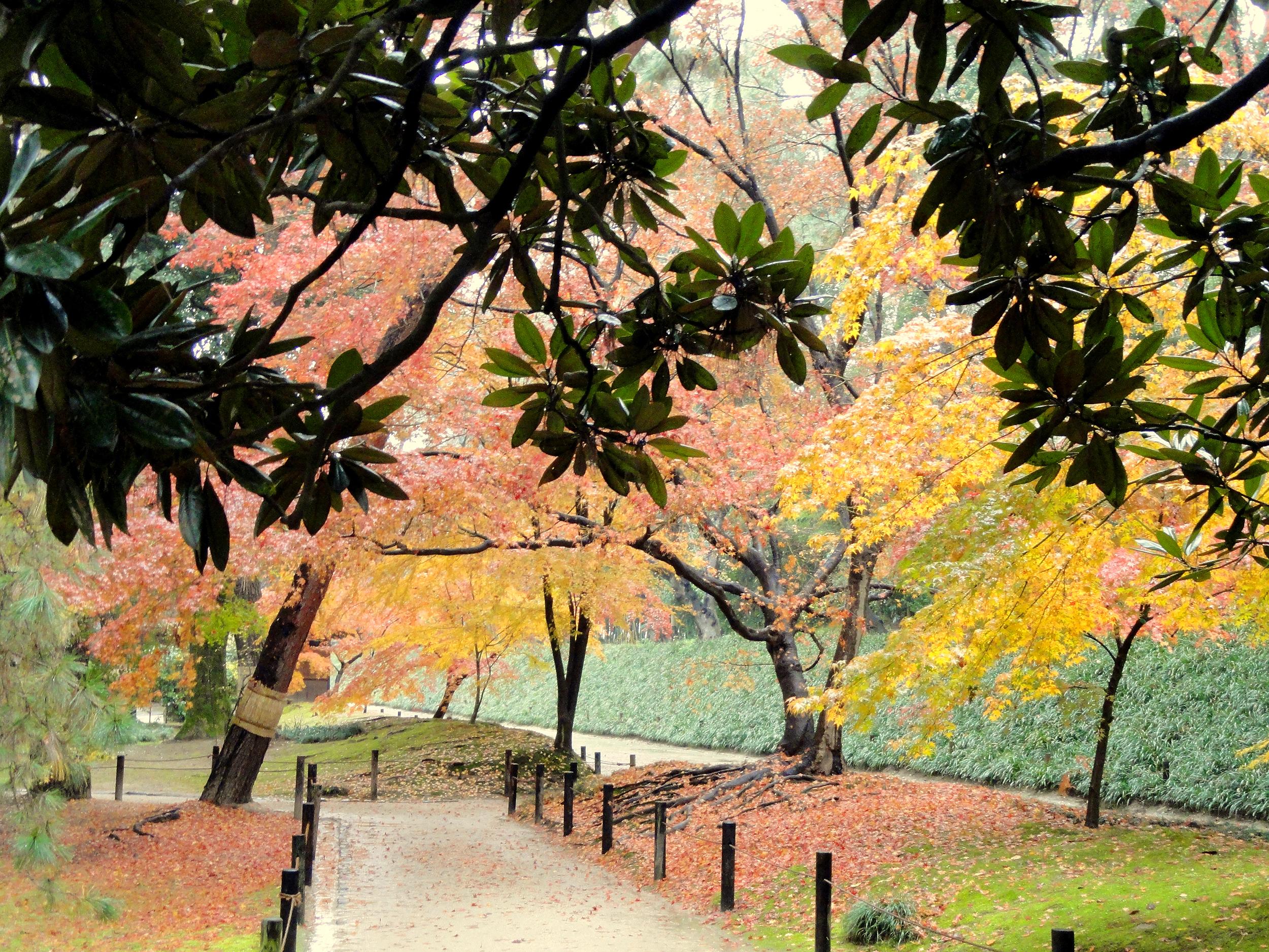 Parque Korakuen, na cidade de Okayama, no Japão, durante o mês de dezembro