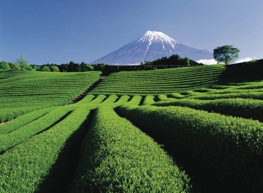 Plantação de chá nos arredores de Tóquio, que fica entre as províncias de Shizuoka e Yamanashi