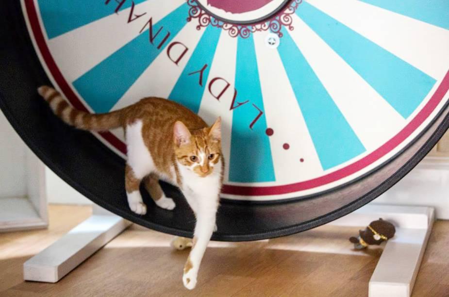 """Não se assuste com a foto! O <a href=""""https://www.ladydinahs.com/"""" target=""""_blank"""" rel=""""noopener"""">Lady Dinah's Cat Emporium</a> não é um restaurante que serve churrasquinho de gato. Estamos apresentando o primeiro café para gatos de Londres. Quem entra para tomar uma xícara de chá ou café também está sujeito a carícias e brincadeiras com os bichanos que circulam por entre as poltronas do local. E se a empatia fluir, é possível adotar um gatinho. Todos os gatos recebem cuidados de um veterinário. Os cafés para gatos se popularizaram e podem ser encontrados em outras cidades como <a href=""""http://viajeaqui.abril.com.br/cidades/alemanha-berlim"""" target=""""_blank"""" rel=""""noopener"""">Berlim</a>,<a href=""""http://viajeaqui.abril.com.br/cidades/espanha-madri"""" target=""""_blank"""" rel=""""noopener""""> Madrid</a> e <a href=""""http://viajeaqui.abril.com.br/cidades/franca-paris"""" target=""""_blank"""" rel=""""noopener"""">Paris</a>"""
