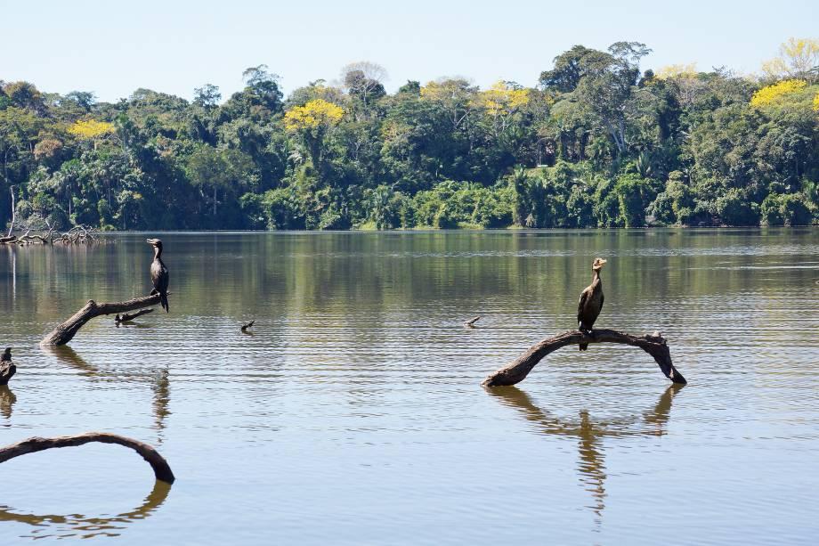 Localizado a duas horas da cidade de Puerto Maldonado, que possui pouco mais de 38 mil habitantes, o Lago Sandoval guarda diversas espécies de plantas e é marcado por uma vida selvagem, com animais crocodilos cercando a região. Suas águas claras e tranquilas ficam dentro do território da Reserva Nacional Tambopata, criada em setembro de 2000 e com uma extensão de mais de 274 mil hectares