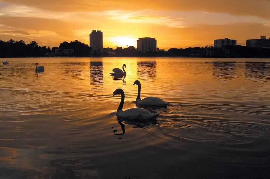 <strong>Cidade de Lakeland</strong>                                                Cisnes nadam livremente pelo lago da cidade de Lakeland, no centro da Flórida; o parque do Lake Mirror foi eleito recentemente pela American Planning Association como um dos 10 lugares públicos mais bonitos dos Estados Unidos